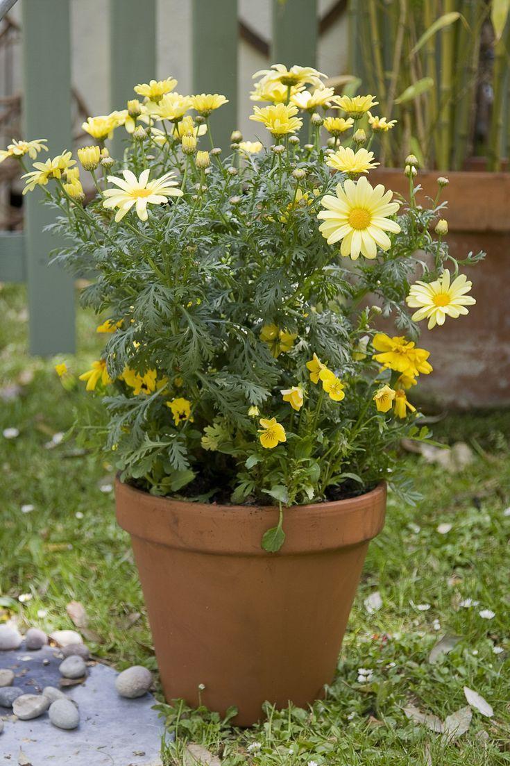 flower gardening ideas for beginners