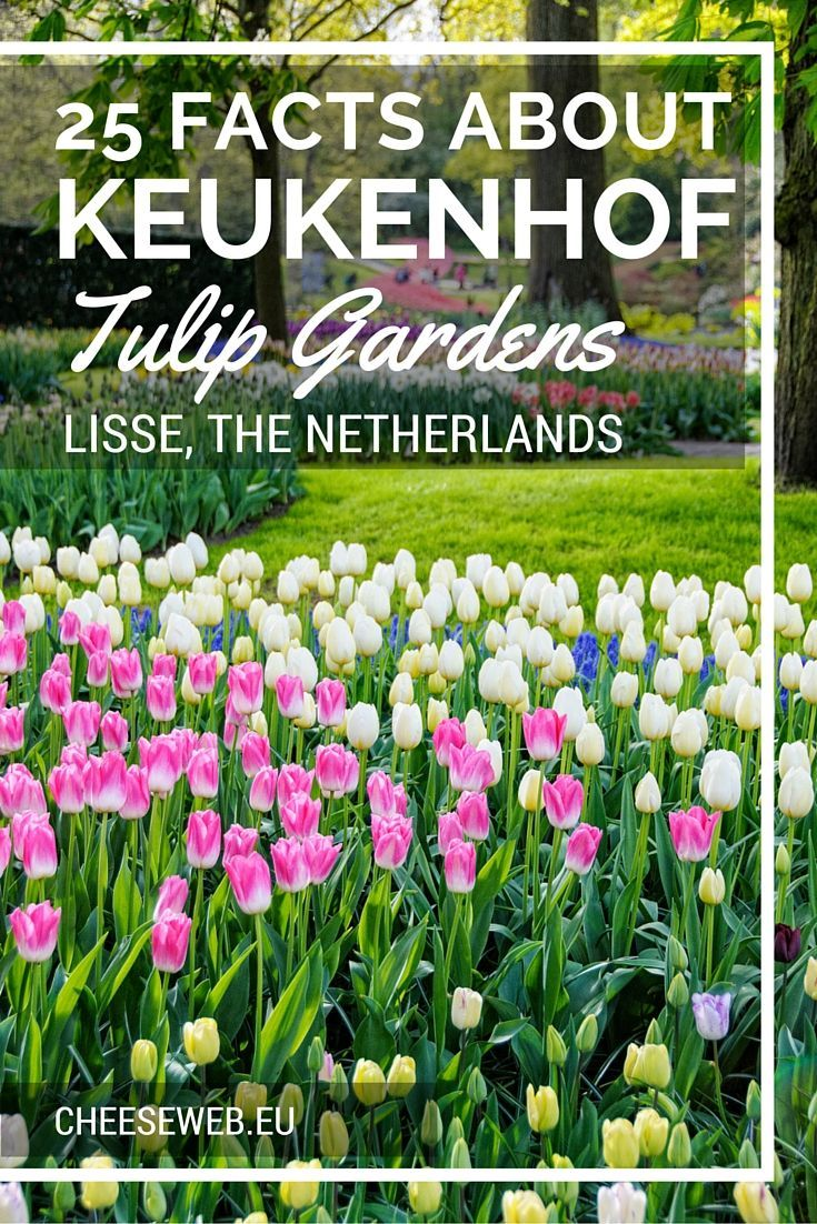 Follow our guide to the tulips season