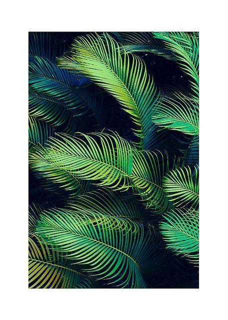 feuilles de palmier | tumblr | Pinterest | Feuilles de palmiers, Palmiers et Vert