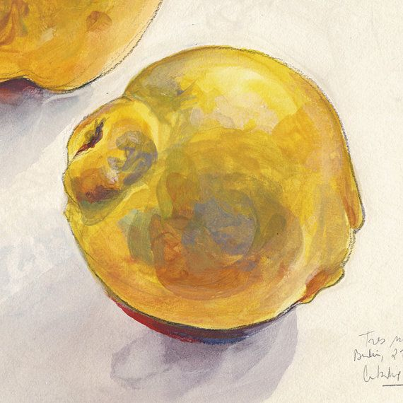 Three golden ripe Quinces. Print of Original fruits by CATILUSTRE