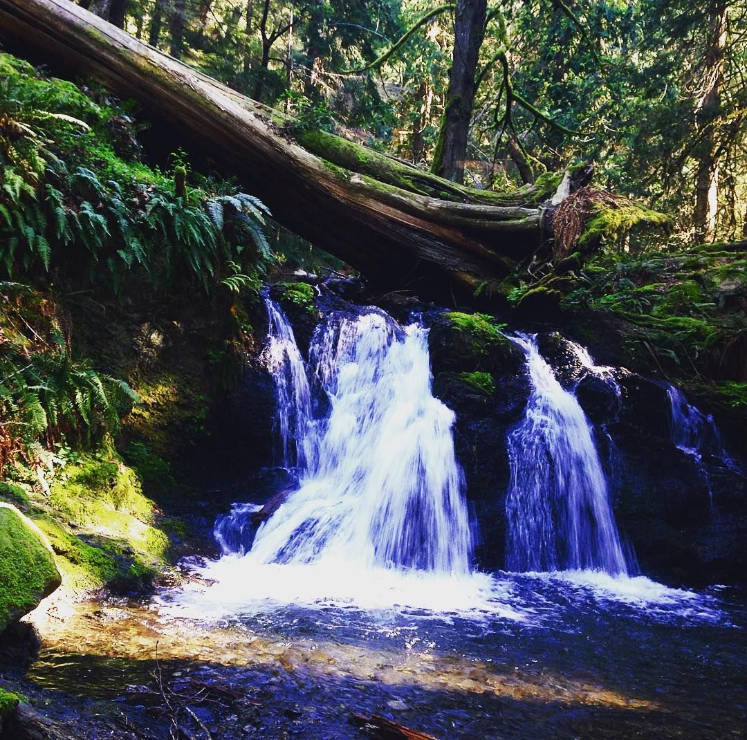 Rustic Falls Moran State Park. A favorite place. #livesimply #thegreatoutdoors #pnw #livefolk #liveauthentic #liveadventurously #trustthewild #ventureonward #forgeyourownpath #wanderfolk #escape #outdoorlife #staywild #staytrue #keepitwild #getoutstayout #wildernessculture #theoutbound #aventureculture #getoutside #optoutside #pnwlife #pnwonderland #nature #adventureawaits #wanderwashington #washingtontrails #orcasisland #moranstatepark by goodandwellsupplyco