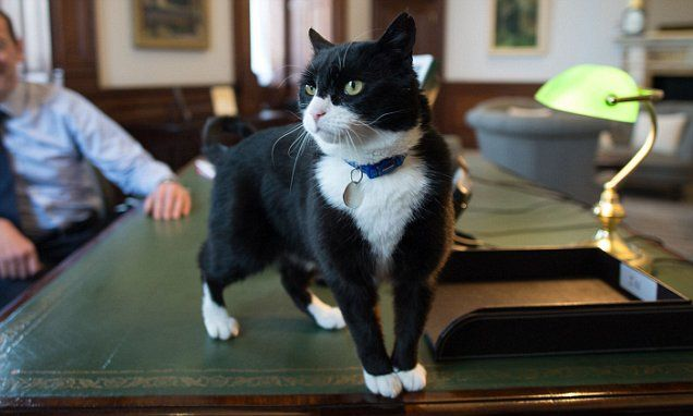 Palmerston the cat brought in as 'chief mouser' at Foreign