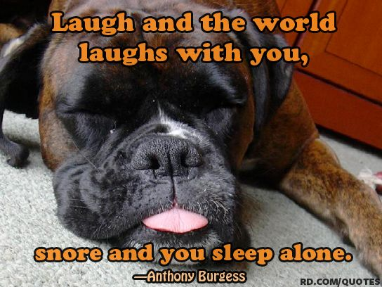 9 Funny Sleep Quotes Worth Sharing Over Coffee Boxer Dogs Funny
