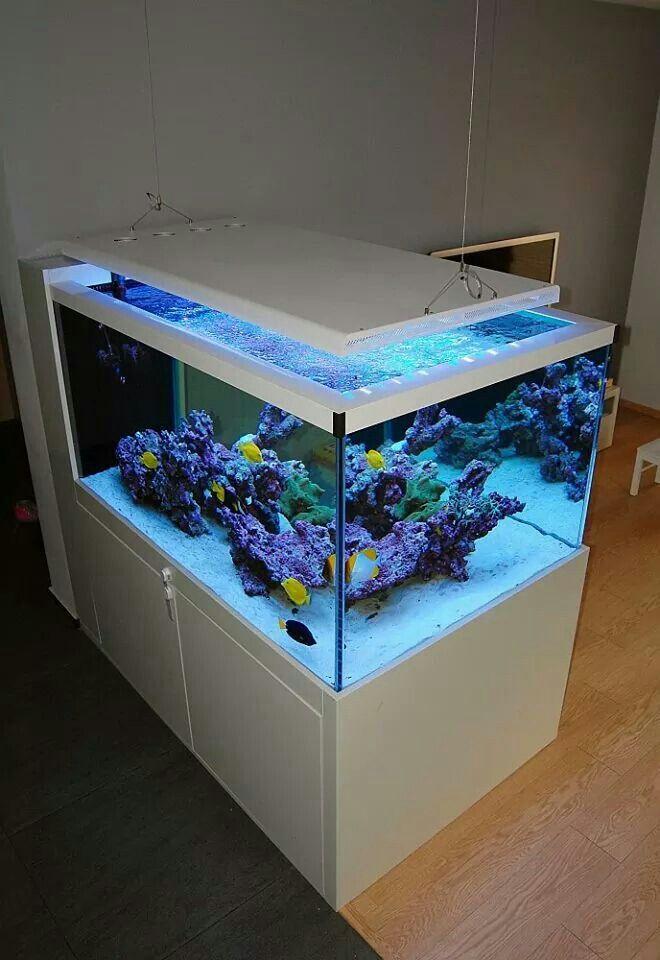 Pin By Seydina Diatta On Aquariums Marine Aquarium Fish Saltwater Fish Tanks Coral Reef Aquarium