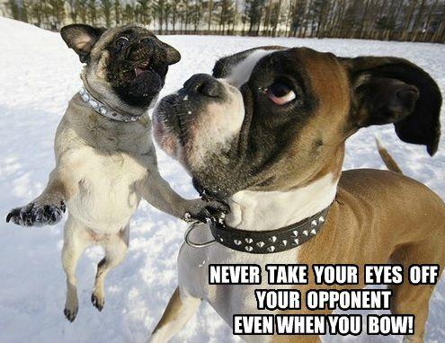 Funny Pug Dog Meme Pun Bruce Lee Quote Shotokan Karate