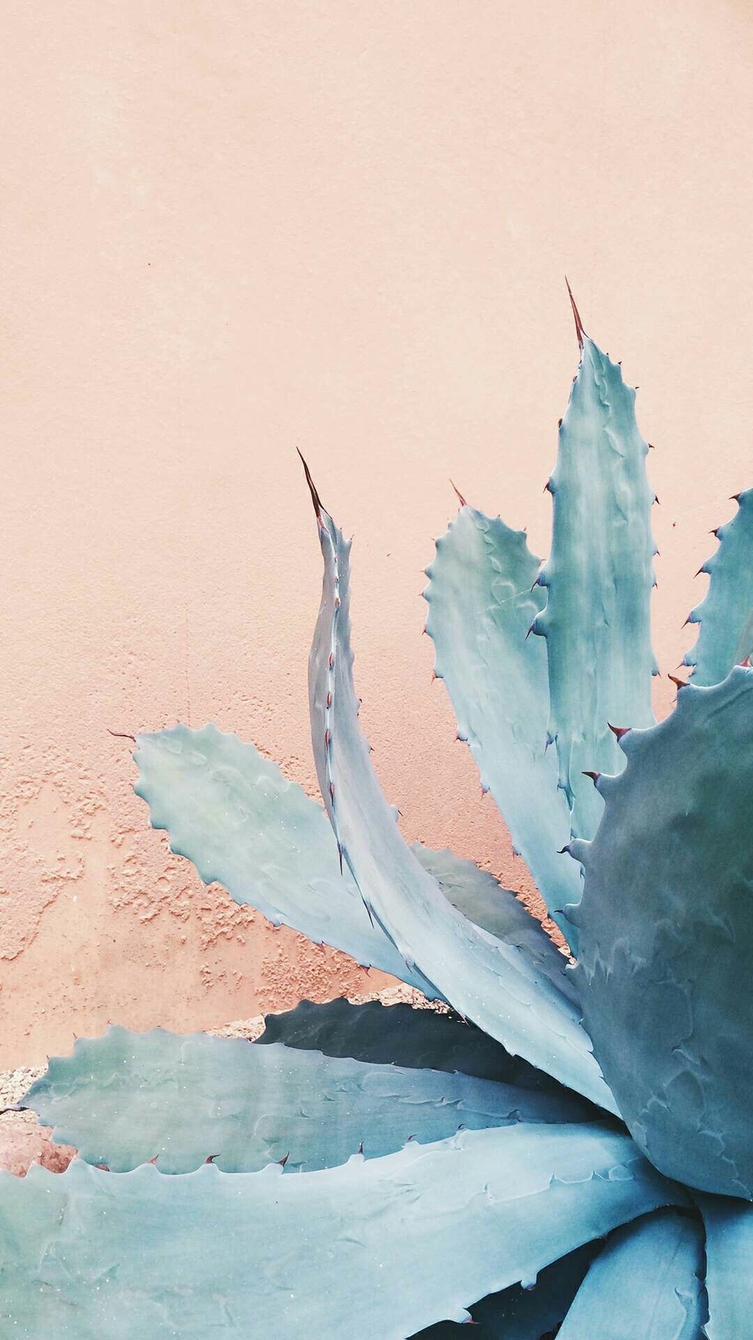 Pin by Ana on Wallpapers   Plants, Cactus, Planting Flowers