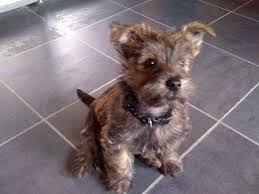 Fourche Dog Uk