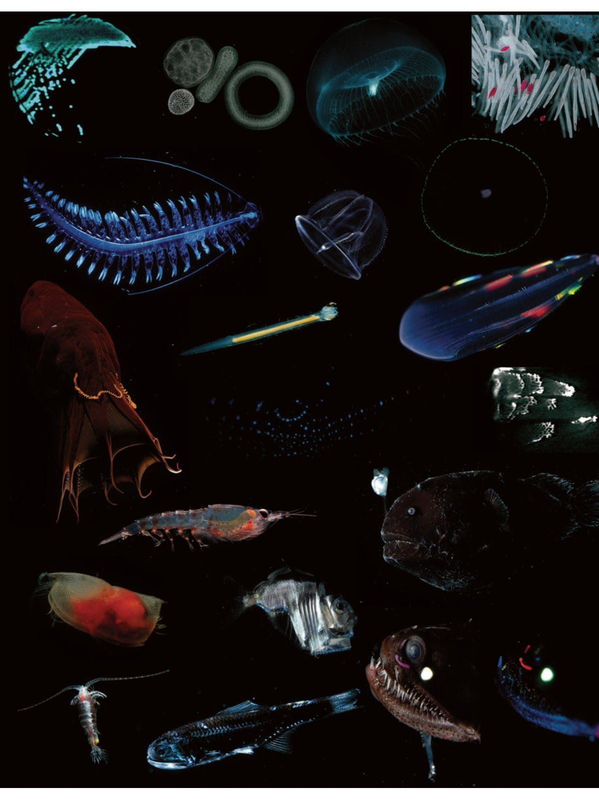A Collection Of Bioluminesence Plankten And Fish With