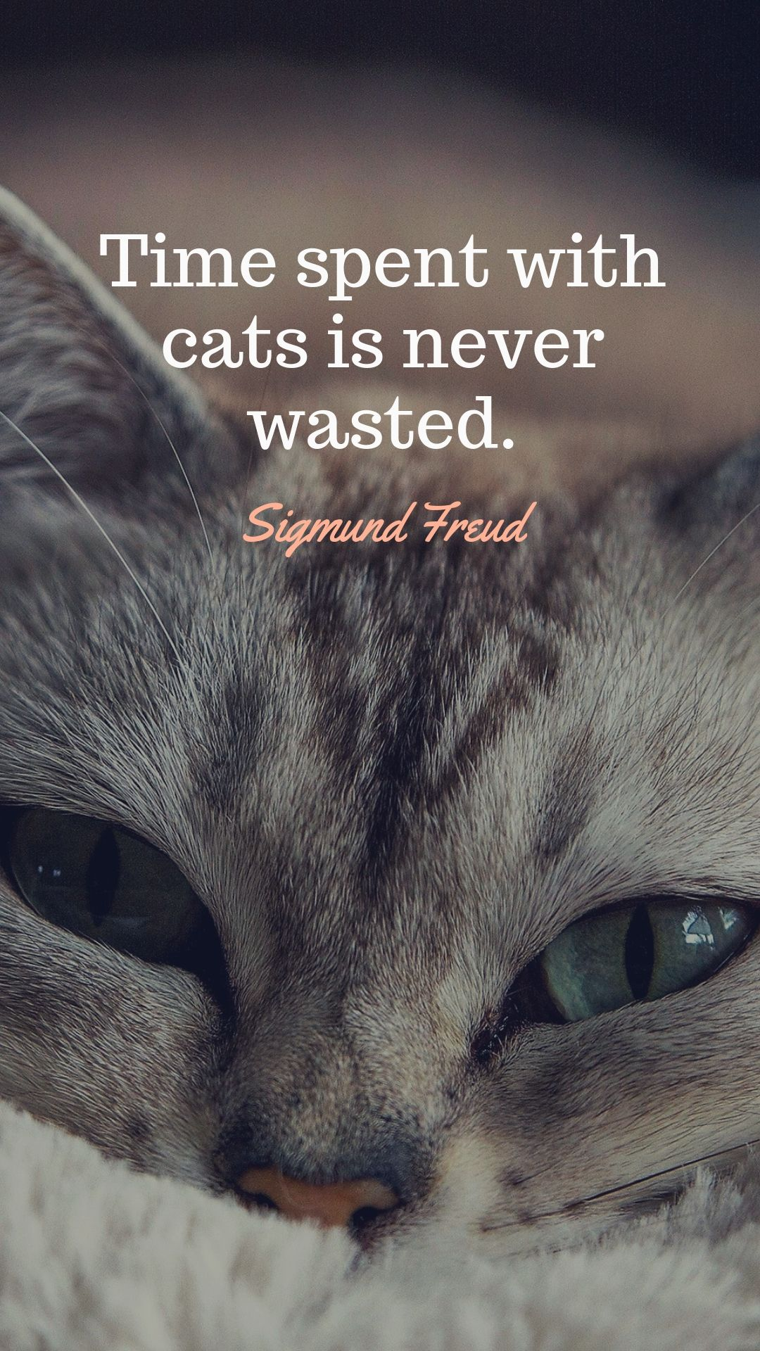 Time Spent With Cats Is Never Wasted Sigmund Freud Quotes Dailyquotes Catquotes Quotesaboutcats Sigmundfr Cat Love Quotes Freud Quotes Cruelty Free Quote