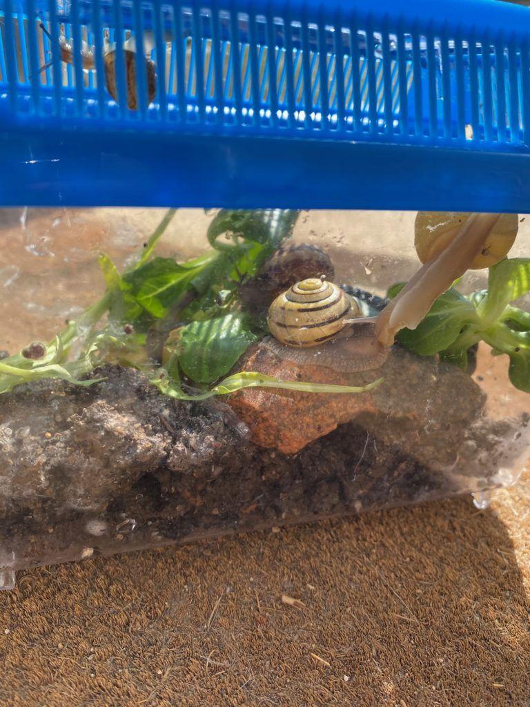 Comment Faire Un Elevage D'escargot : comment, faire, elevage, d'escargot, Idée, Activité, Enfants, élevage, D'escargots, Terrarium, Elevage, Escargot,, Terrarium,, Faire