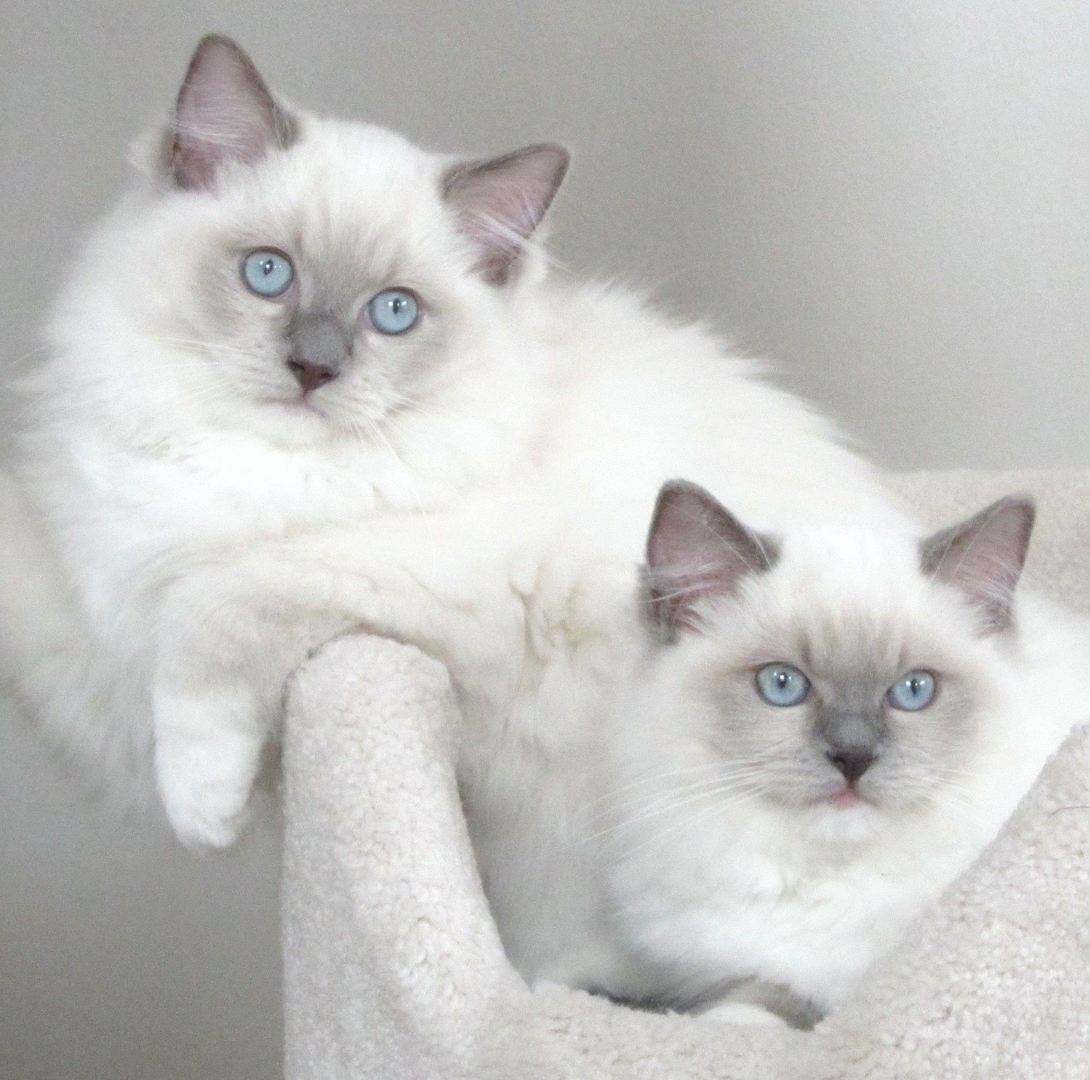 Cupcake & Sushi Kittens cutest, Cute cats, Beautiful cats