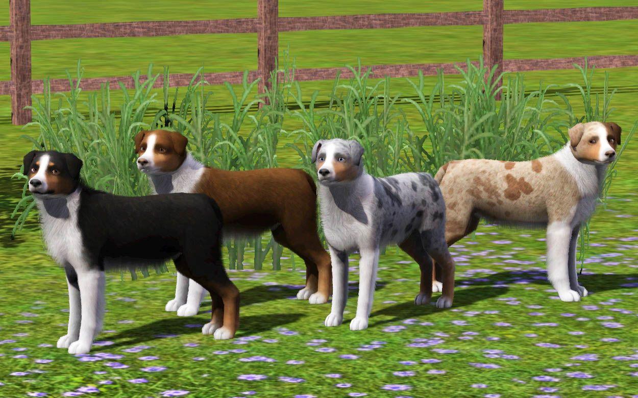 Mod The Sims 4 Improved Australian Shepherds Sims pets