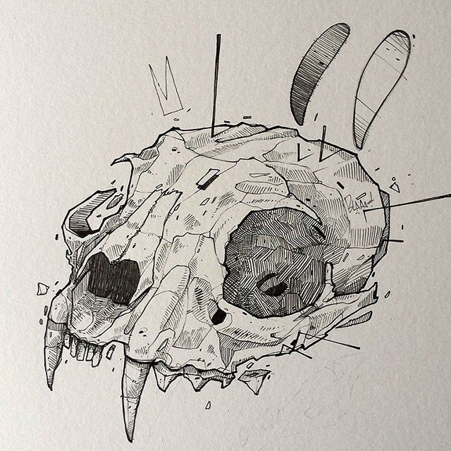 Bobcat Skull Drawing