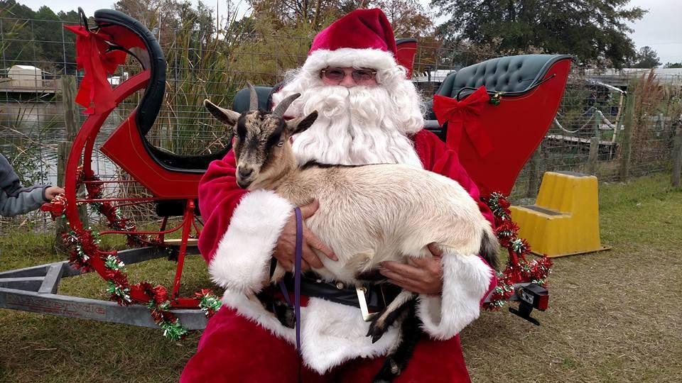 Christmas On The Farm Celestial Farms Jacksonville Fl December 9 Animal Rescue Farm Animals Whimsical Garden