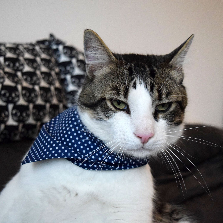 Polka Dot Cat Bandana Blue Small Dog Bandana Classic Pet Etsy In 2020 Cat Bandana Pet Bandana Dog Neckwear