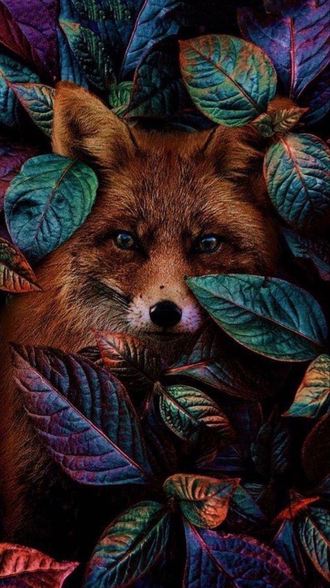 Fox Rainbow leaves