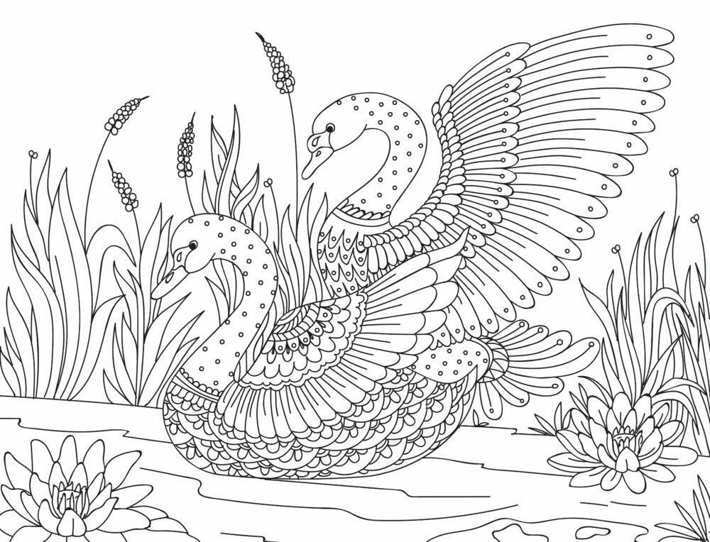 Mandalas Para Pintar Animal Bordeado De Paisaje On: Pin De Jeannette Esquivel En Magdalas