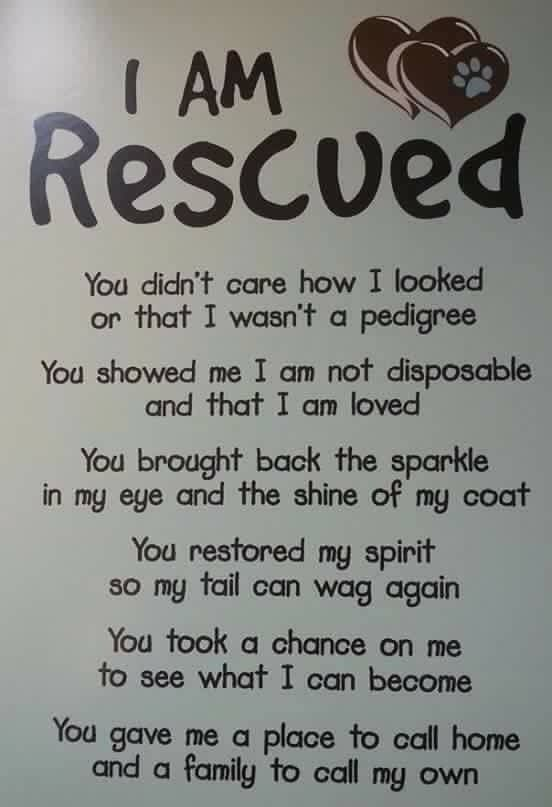 I Am Rescued Rescue Quotes Dog Quotes Rescue Dogs