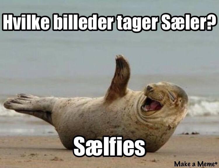 Hvilke Billeder Tager Saeler Enjoii Dk Masser Af Vidoer Og Billeder Sjove Vittigheder Memes Humor Sjove Jokes