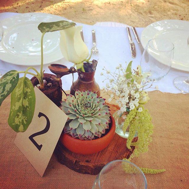 Beautiful succulence and clay pot centerpieces for a beautiful Tulum wedding by Mindy Rosas, Tulum Living Weddings #tulumlivingweddings  #mindyrosas #weddingcoordinator  #Tulum #Mexico #destinationwedding #tulumwedding  #beachwedding #luxuryweddingstulum #centerpieces