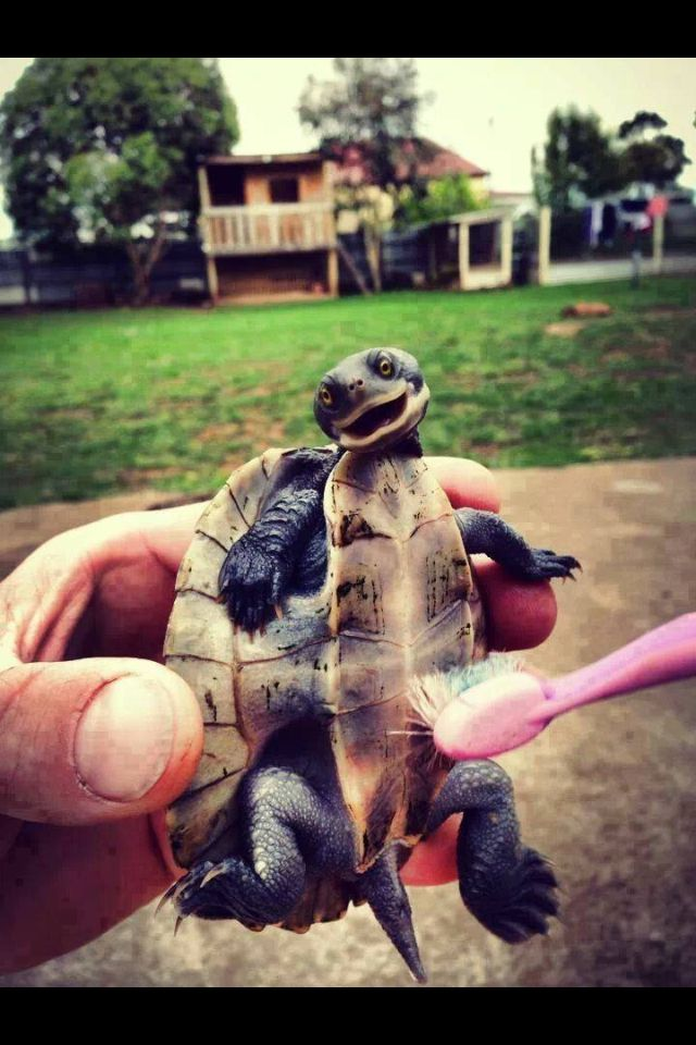 Brushing Just Makes You Feel Better Keep Those Smiles Healthy By Brushing Twice A Day For 2 Minutes Never Underestimate T Cute Animals Happy Turtle Turtle