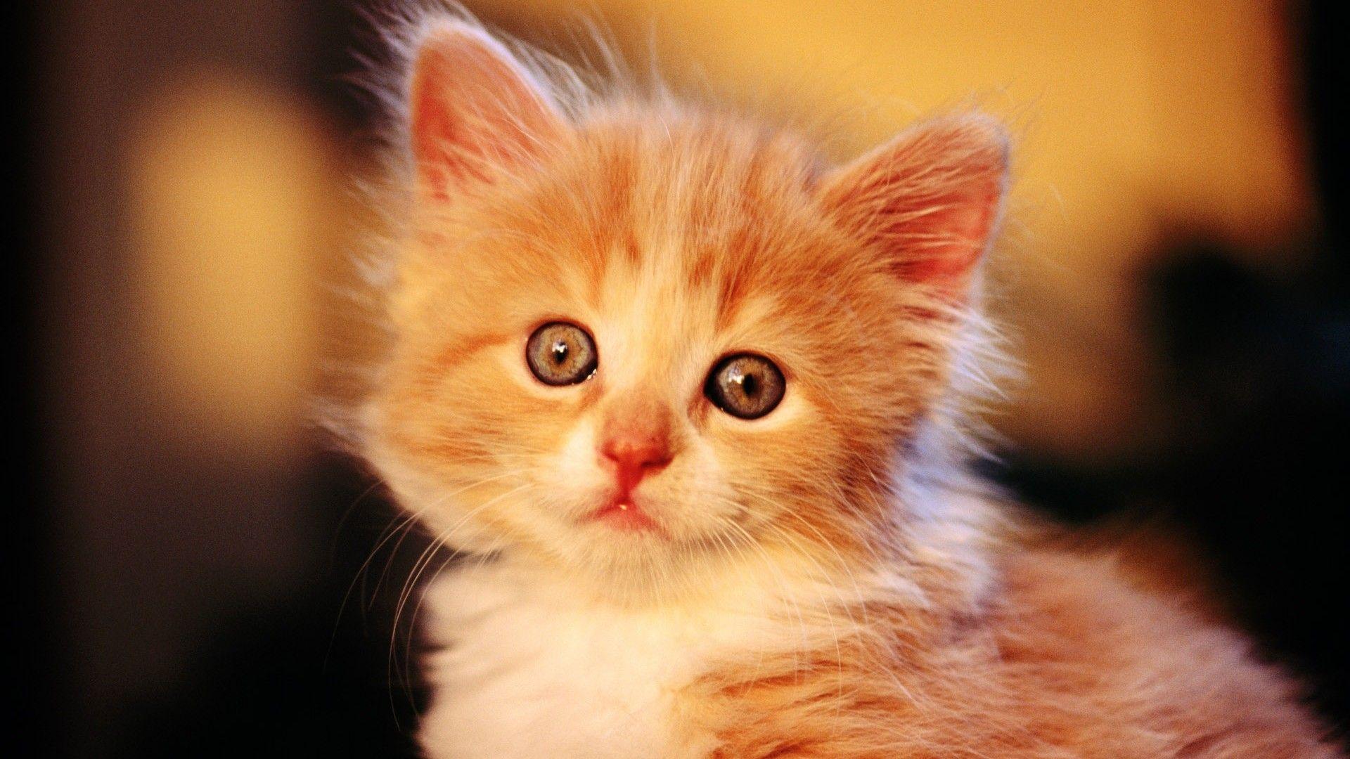 Baby Cat Wallpaper Mobile Viy