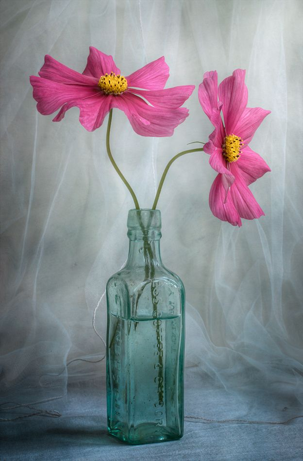 Pink Cosmos Flower Painting Flower Art Cosmos Flowers
