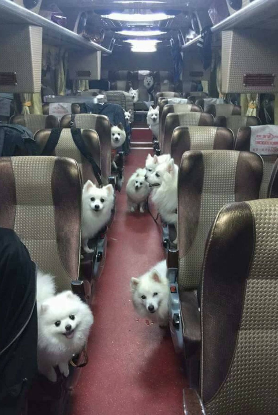 I Ve Found The Bus To Heaven Cute Animals Funny Animal Pictures