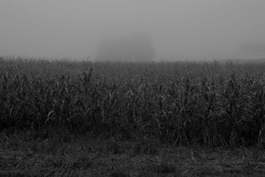 Oh this creepy cornfield is definitely happening in book three.
