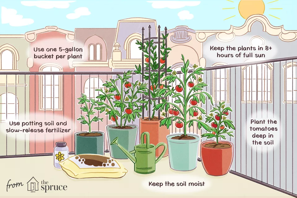 5 Tips for Growing Awesome Tomatoes in Containers is part of Growing tomatoes in containers, Growing tomatoes, Tips for growing tomatoes, Tomato container gardening, Growing cucumbers, Container gardening - Tomatoes aren't the easiest plants to grow, particularly in the containers, but it is a gardener favorite  Tomatoes need plenty of sun and water