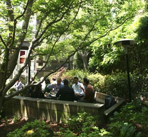 Garden at Arlequin Cafe