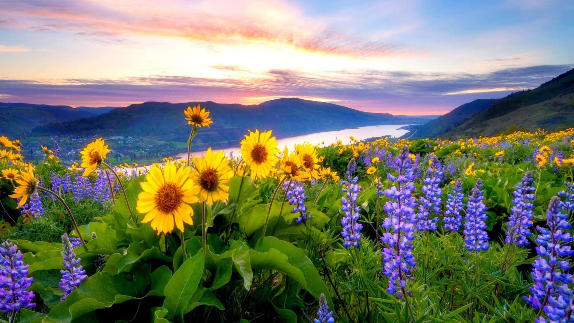Spring Mountain Landscape Flowers Purple Colored Hills: Spring Flowers Mountain Lake Hills [1920×1080]