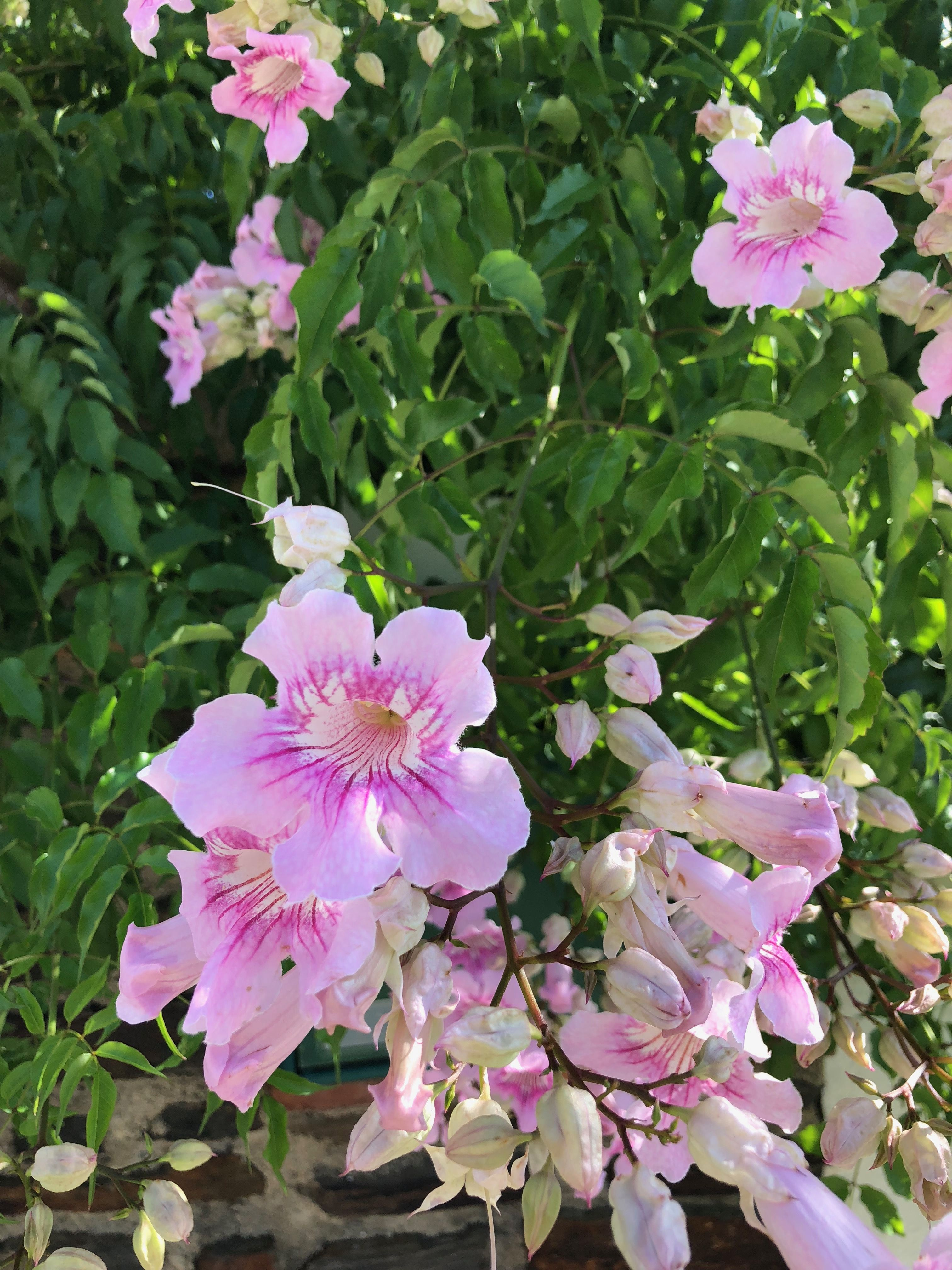Pin by Heather Noon on Gardening Plants, Garden