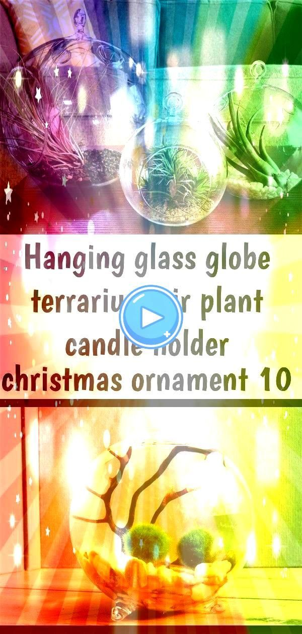 Plant Candle Holder Christmas Ornament Single Glass Globe Marimo Moss Ball Terrarium Kit  Etsy 2888 Bauanleitung  Terrarienrückwand mit Wasserfall  YouTubeHanging Gl...