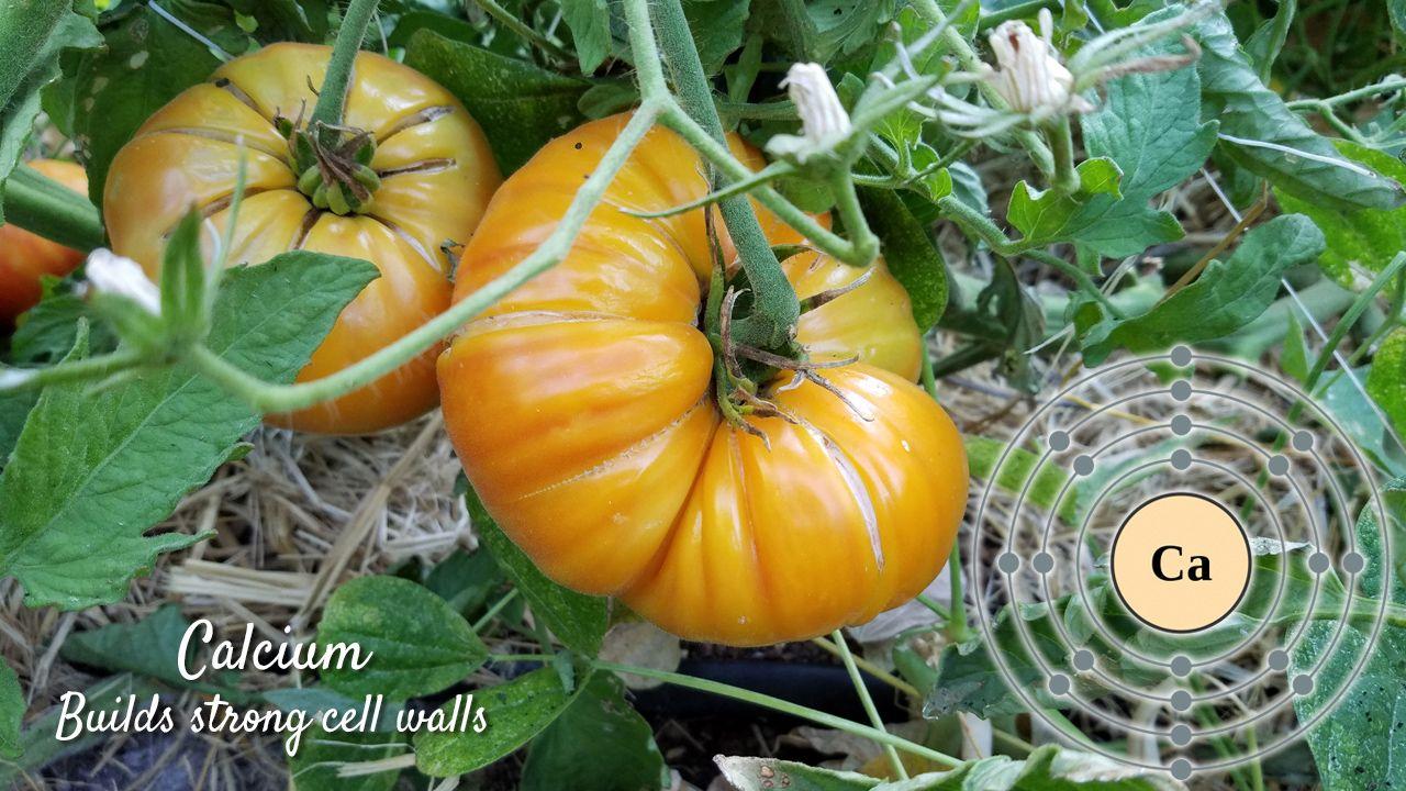 How to use fertilizerscalcium grow organic gardening