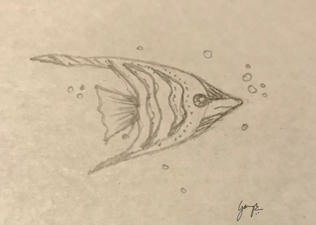 Fish Drawing Pencil Drawing For Drawing Pencil Sketch