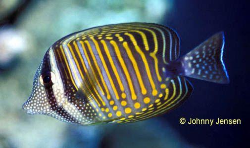 Pin On Fish Of The Warm Seas
