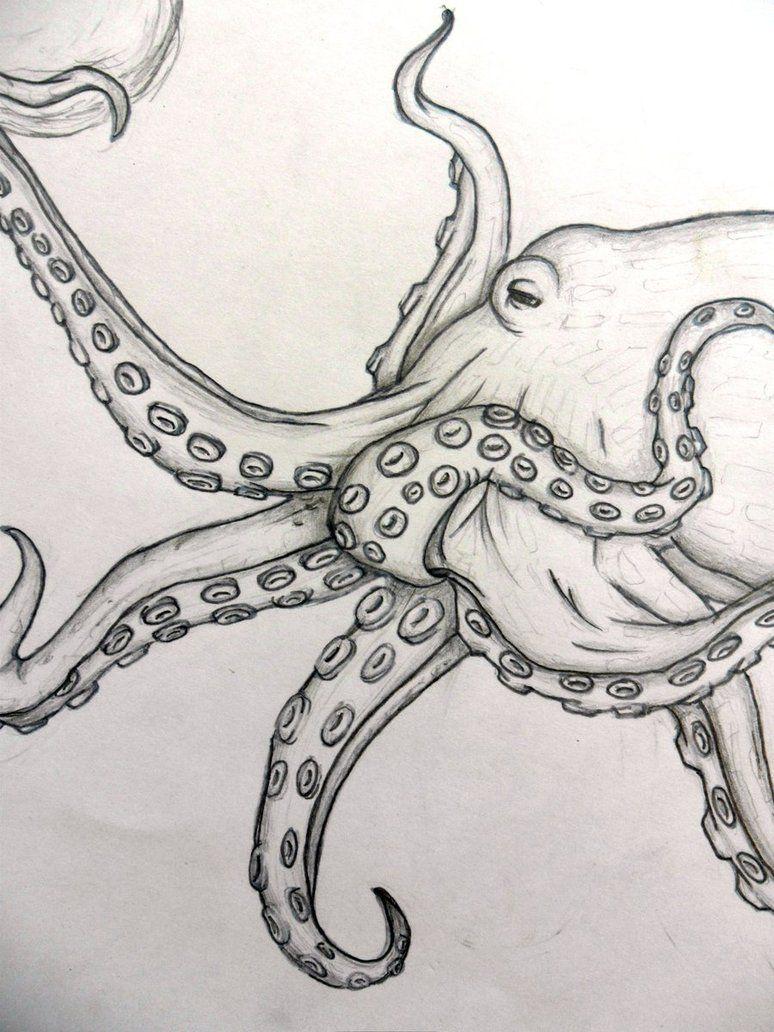 Realistic Octopus Drawing : realistic, octopus, drawing, Realistic, Octopus, Letmelivelovedraw, DeviantART, Drawing,, Tattoo, Design