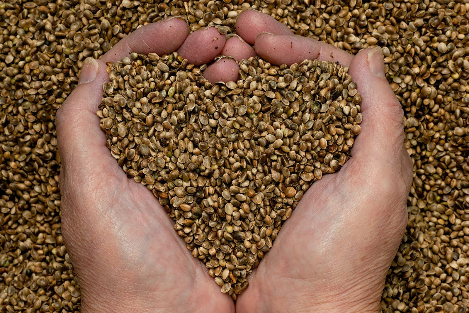 Hemp is not unique in having all the essential amino acids in its embryonic seed. Flax seeds also contain all the essential amino acids as do many other seeds in the plant kingdom. What is unique about hemp seed protein is that 65��0of it is globulin edistin. That is the highest in the plant kingdom.