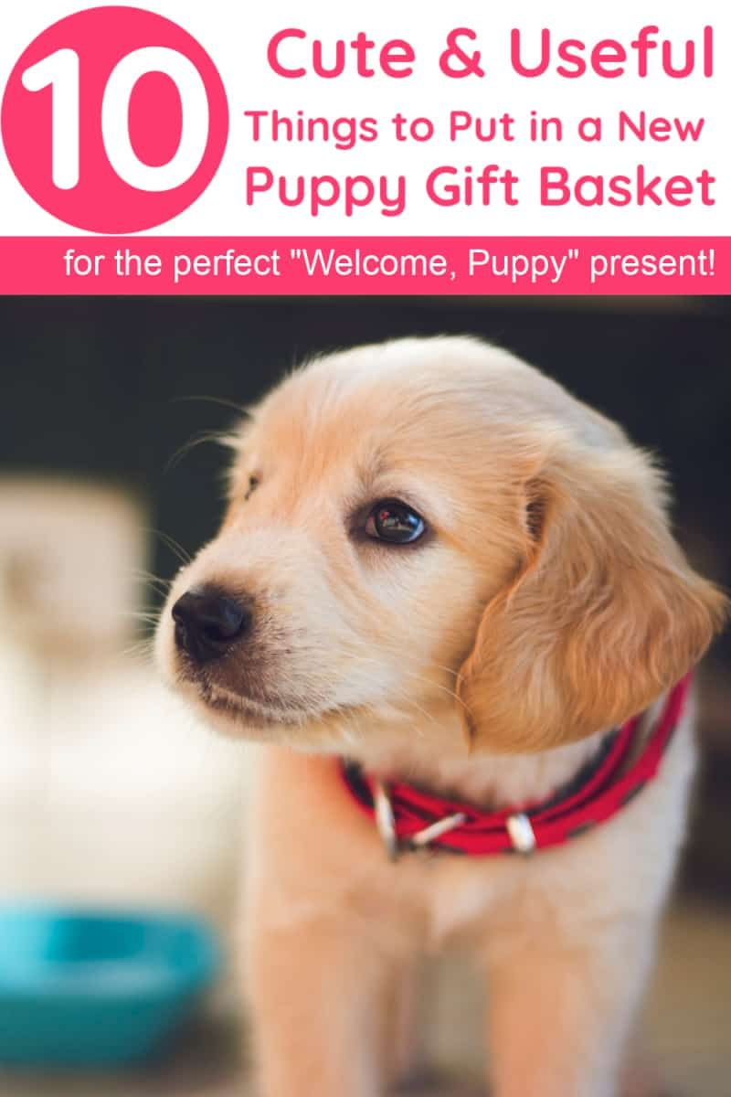 """10 Things to Put in a to the Family"""" New Dog Gift"""