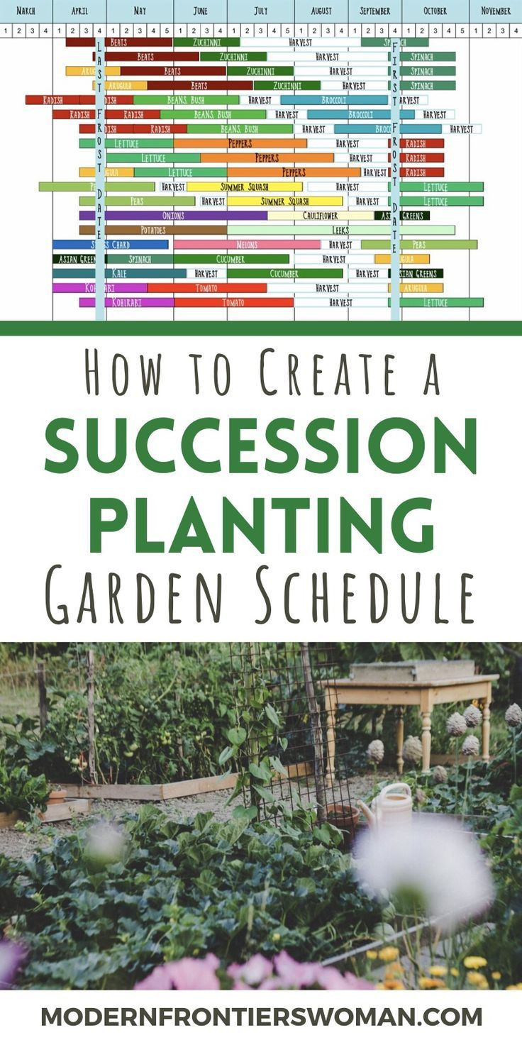 Do you wish you could get more out of your vegetable garden space? By creating a succession planting schedule, you can! Increase yields from all your crops with proper planning and foresight. Thi…