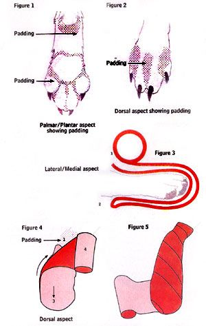 Veterinary Dog Diagrams Of Paws Wiring Diagram