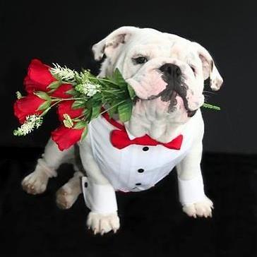 NEW Bulldog Tie Clip British Bulldog English Bulldog Tie Bar Dog Canine Vet Pet
