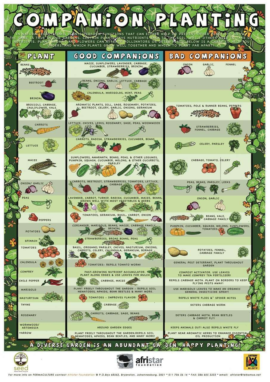 When planning your garden, it is important to choose plants that grow well together. These friendly pairings will turn your garden into a diverse and thriving eco-system, filled with abundant healthy vegetables and plants.