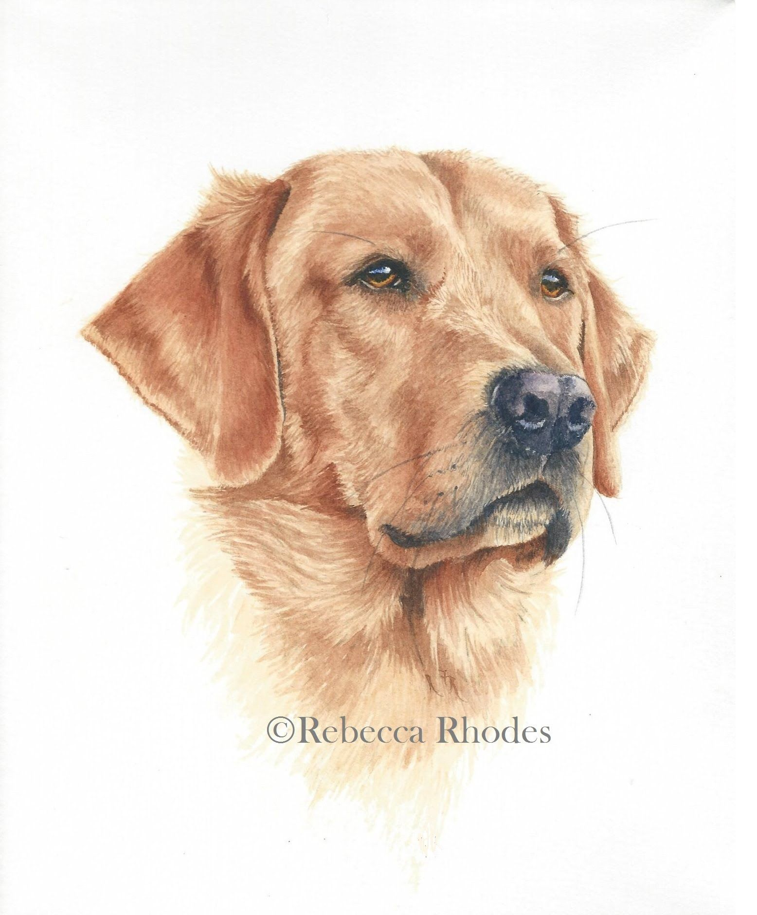 How To Paint A Realistic Retriever Dog In Watercolor Watercolor