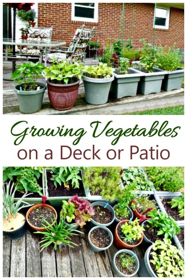 Vegetable Garden on a Deck  Tips for Growing Vegetables on a Patio is part of Growing vegetables, Home vegetable garden, Deck garden, Patio garden, Container gardening vegetables, Veggie garden - Vegetable gardens don't ned large amounts of space,with this tutorial  You can grow a complete vegetable garden on a deck this year with these easy tips