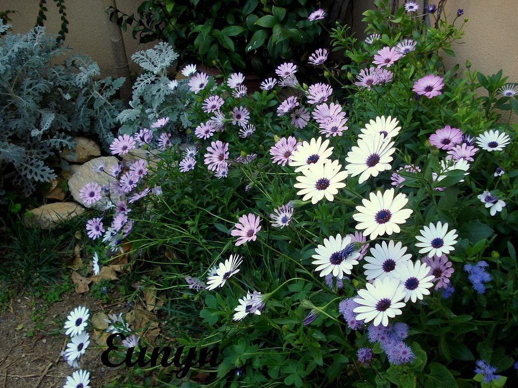Plantas para emplazamientos c lidos y secos y pleno sol for Plantas exterior sol