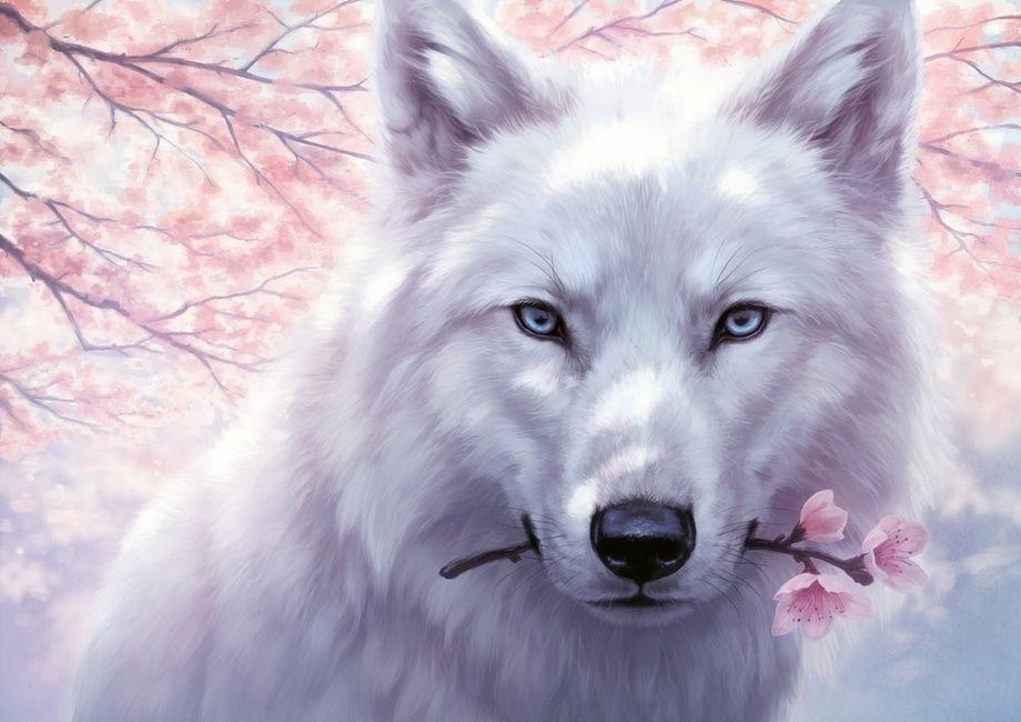 Photo of Cecil Laska (Wolf Form)