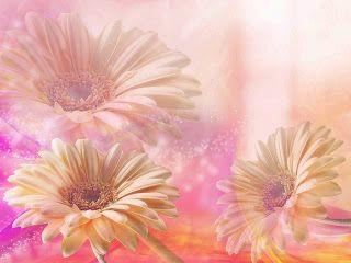 Zoom Diseño Y Fotografia Wallpapers Flowersfondos Flores Colores