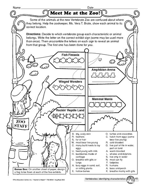 Vertebrates Identifying Characteristics Worksheet With Images